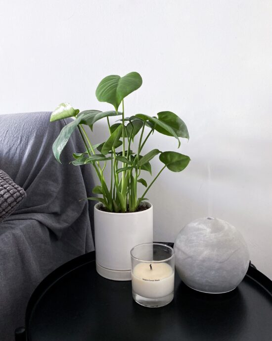 Indoor Plants For Small Spaces - Baby Monstera